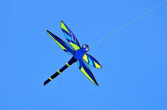 Blue And Yellow Mosquito Hawk Kite Flying In The Bywater Of New Orleans by Michael Hoard