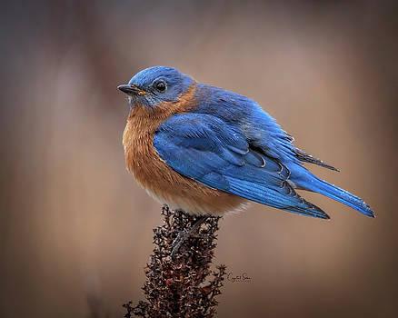Blue bird by Crystal Socha