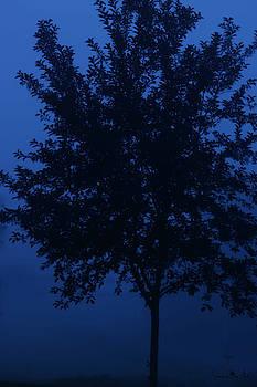 Blue Cherry Tree by Sandra Day