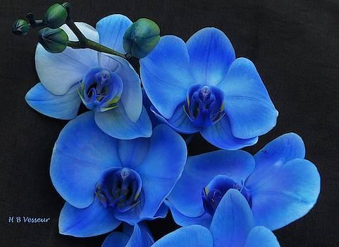 Blue Feelings... by B Vesseur