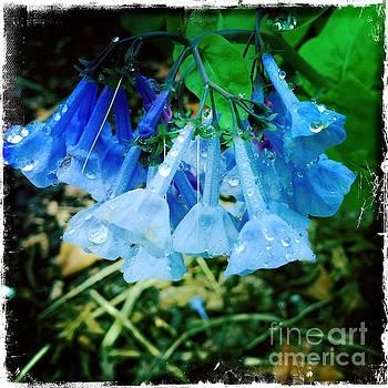 Blue Flowers in the Rain - Central Park New York by Miriam Danar