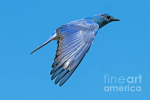 Blue Fly By by Mike Dawson
