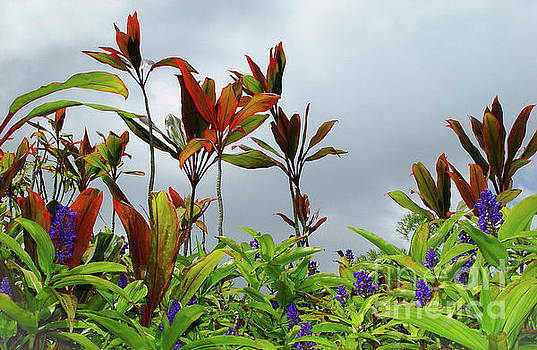 Blue Ginger Flowers and Ti Leaf Plants by D Davila