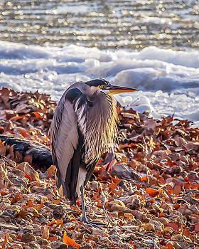 Blue Heron in Winter by David Wagenblatt