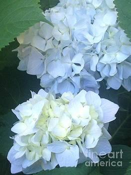Blue Hydrangea 4 by Kim Sy Ok