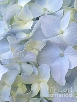Blue Hydrangea 5 by Kim Sy Ok