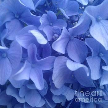 Blue Hydrangea 6 by Kim Sy Ok