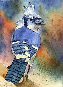 Blue Jay by Beth Fontenot