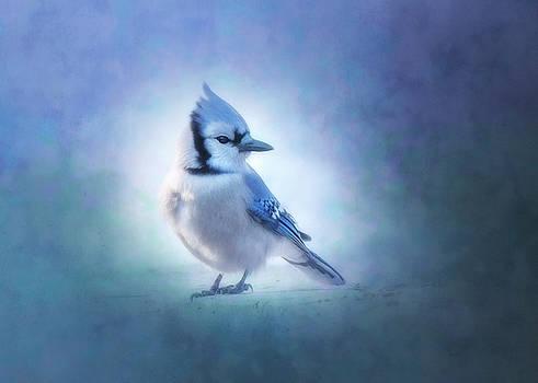Rosette Doyle - Blue Jay in Blue