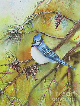 Blue Jay in the Pines by Donlyn Arbuthnot