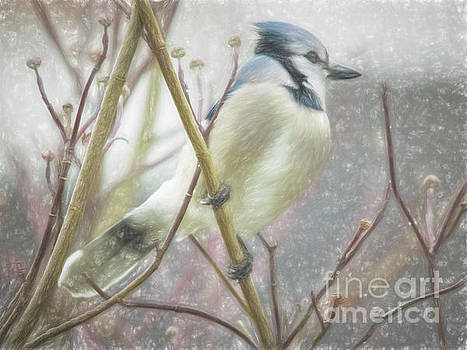Blue Jay Moment by Tom York Images