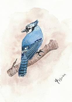 Blue Jay Watercolour by Martina Fagan