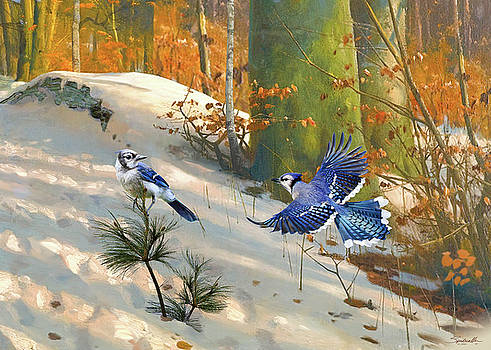 The Blue Jay by M Spadecaller