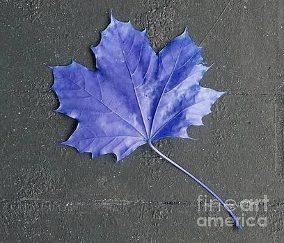 Blue leaf by Christopher Shellhammer