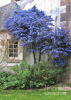 Blue Lilac by Dave Mills