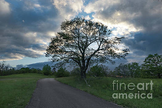 Blue Ridge Tree Silhouette by Norma Brandsberg