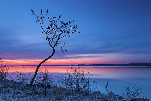 Blue silence by Davor Zerjav