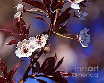 Blue Skies And Blossoms by Kathy M Krause