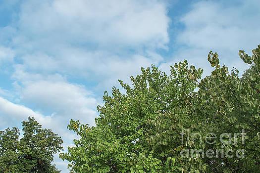 Blue skies by Diane Friend