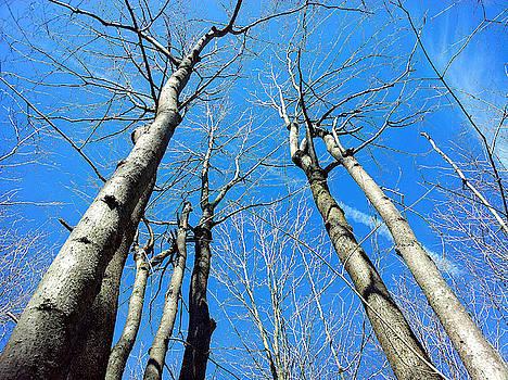 Blue Sky Up by Susan Janus