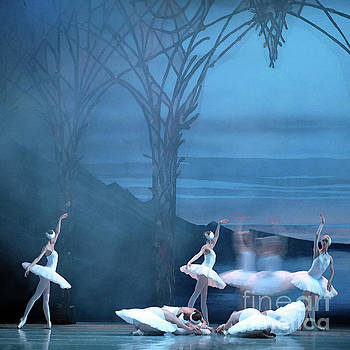Blue Swans by PJ Boylan
