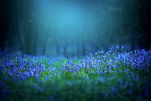 Bluebells flowers by Svetlana Sewell