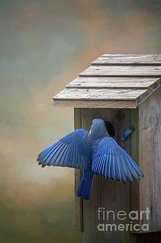 Bluebird at the Nest by Warrena J Barnerd