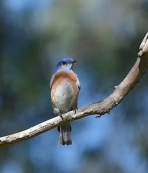 Fraida Gutovich - Bluebird Branch