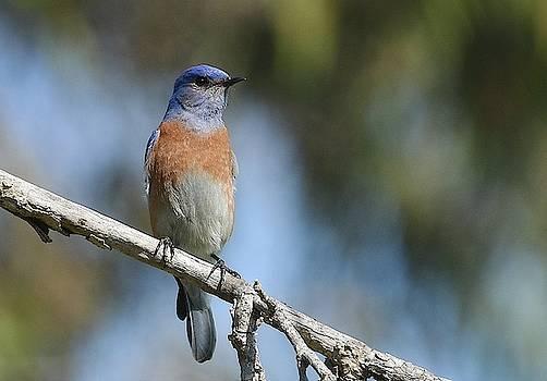 Fraida Gutovich - Bluebird Of Happiness 3