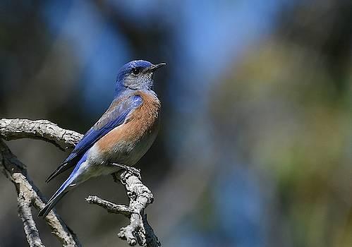 Fraida Gutovich - Bluebird Of Happiness