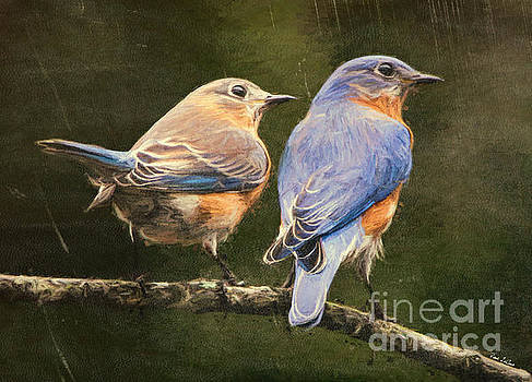 Bluebirds In Spring by Tina LeCour