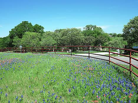 Bluebonnet Trail Ennis Texas V2 2019 by Rospotte Photography
