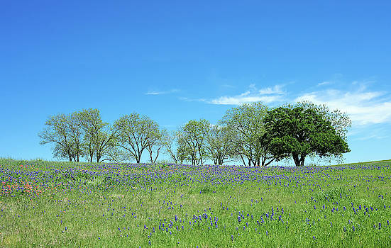 Bluebonnet Trail Ennis Texas V3 2019 by Rospotte Photography
