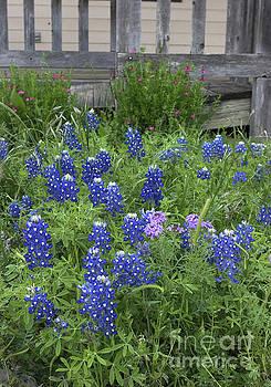Bluebonnets and Porch by Patti Schulze