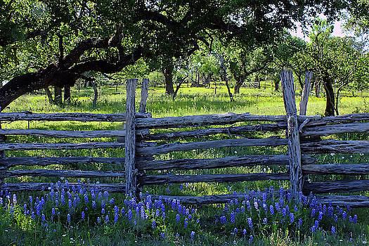 Bluebonnet's Fence by Bill Morgenstern
