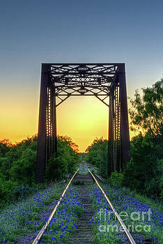 Bluebonnets on the abandoned railroad by Paul Quinn