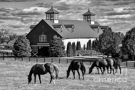 Bob Phillips - Bluegrass Horse Farm 2