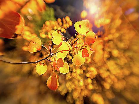 Blurred Orange by Michele James
