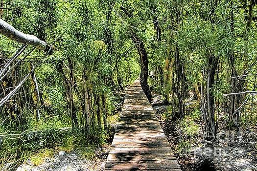 Boardwalk through the Jungle by Joe Lach