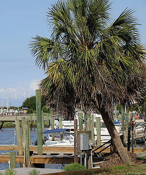 Boats And Palm Tree At Southport 3 by Cathy Lindsey