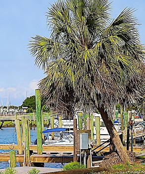 Boats And Palm Tree At Southport 4 by Cathy Lindsey