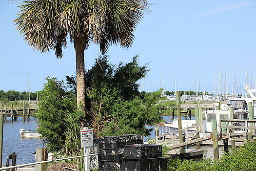 Boats And Palm Tree At Southport 7 by Cathy Lindsey