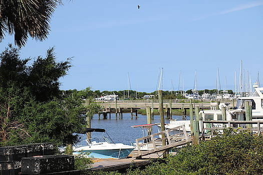 Boats And Palm Tree At Southport 9 by Cathy Lindsey