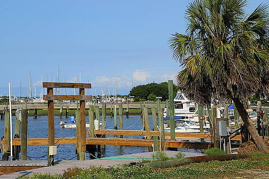 Boats And Palm Tree At Southport by Cathy Lindsey