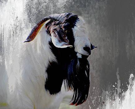 Boer Goat by Linda Cox