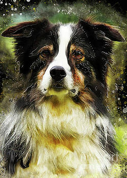 Justyna Jaszke JBJart - Border Collie dog