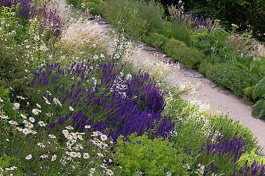 Border of Mixed Summer Flowers 1 by Jenny Rainbow