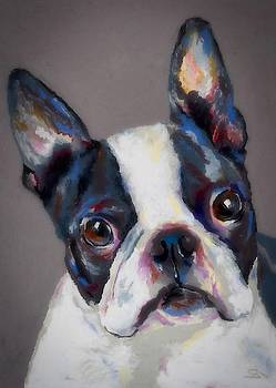 Boston Terrier by Stephen Anderson