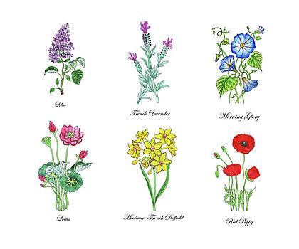 Irina Sztukowski - Botanical Watercolor Flowers Collection I