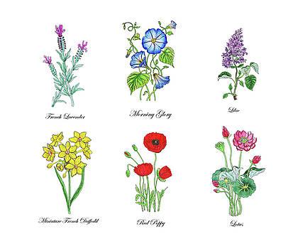 Irina Sztukowski - Botanical Watercolor Flowers Collection II